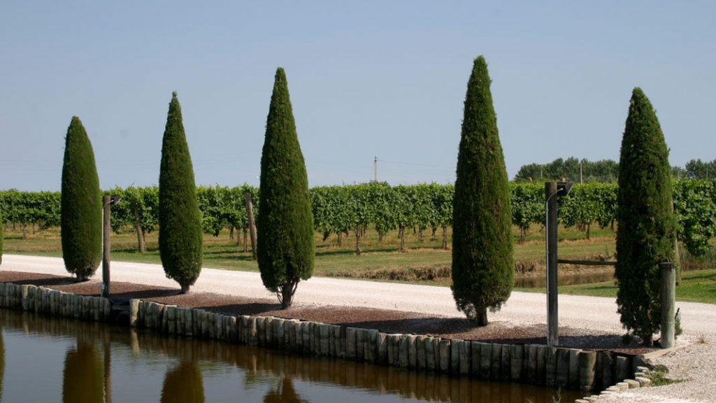 Bortolusso Wein in Carlino, Friaul - goodstuff AlpeAdria - © Gustav Schatzmayr