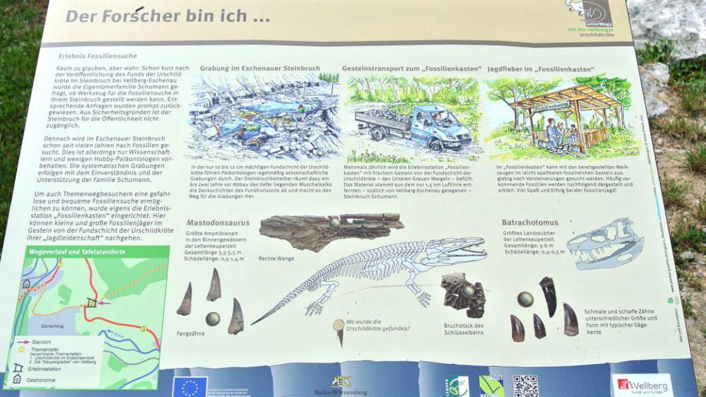 Vellberg - Ur-Schildkröte, Fossiliensuche - goodstuff AlpeAdria