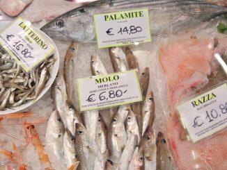 Fische - Molo - goodstuff AlpeAdria