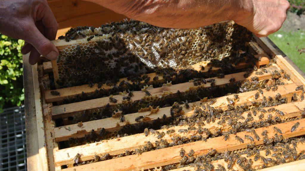 Bienen im Stock - goodstuff AlpeAdria