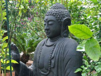 Buddha im Biozitrusgarten - goodstuff AlpeAdria