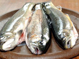 Frische Zerza Fische - goodstuff AlpeAdria