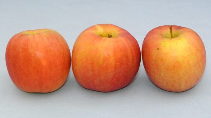 Äpfel - Apfelrezepte - goodstuff AlpeAdria