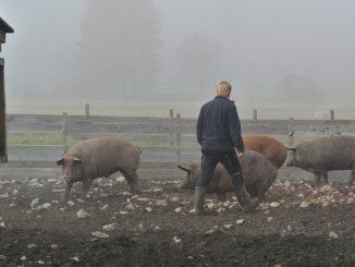 Im Schweinegarten von Stefan Schellander - goodstuff AlpeAdria
