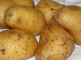 Kartoffeln für Kartoffelsalat - goodstuff AlpeAdria