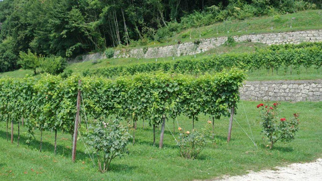 Im Weingarten - goodstuff AlpeAdria