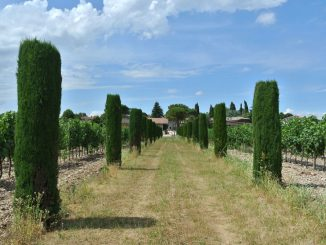Weingut Bressan in Farra d'Isonzo, Italien - goodstuff AlpeAdria