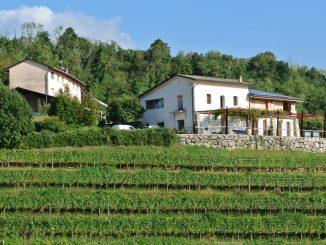Weingut La Luna Storta in Cividale del Friuli, Italien - goodstuff AlpeAdria